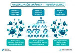 Organización dual dinámica